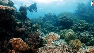 David de Rothschild surveys the Great Barrier Reef off the coast of Australia.